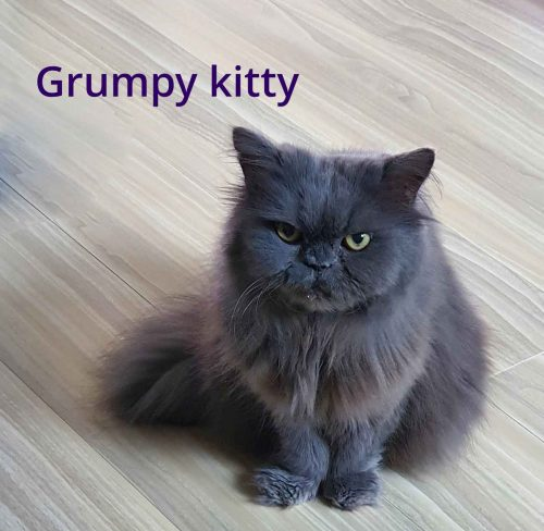 grumpy kitty with a terrible mindset